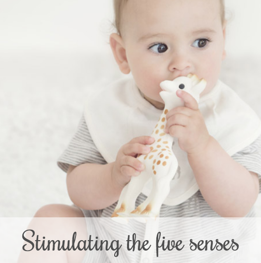 Sophie la girafe stimulating the 5 senses